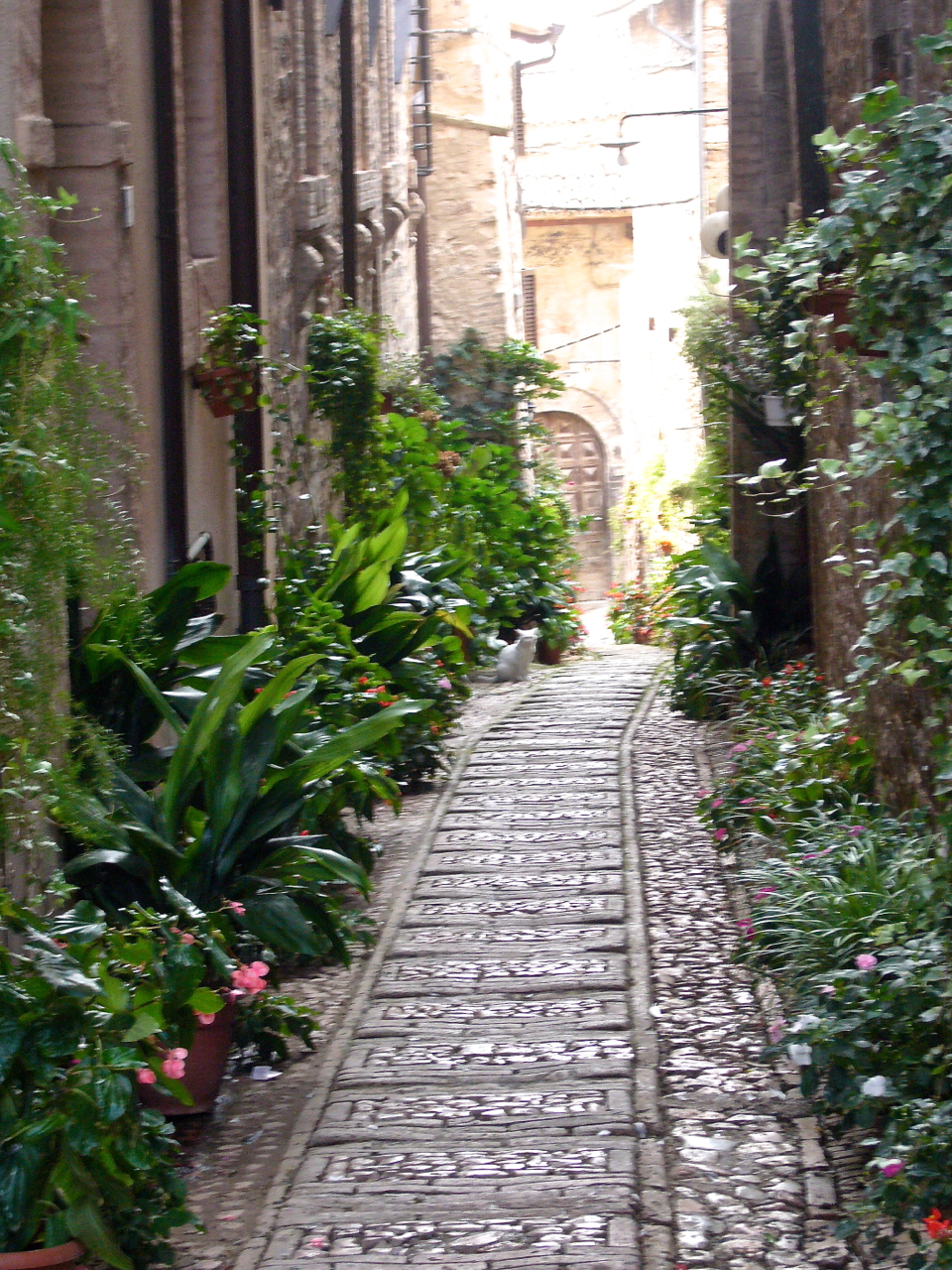 spello bike tours umbria