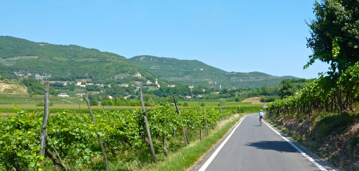 cycling vineyards private tours italy