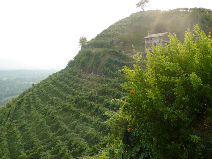 cartizze hills prosecco tours italy