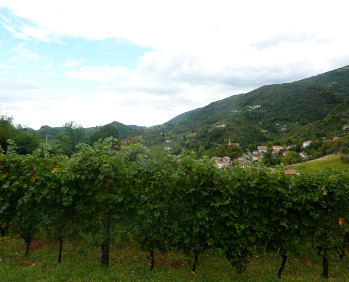 vineyards walking tours italy