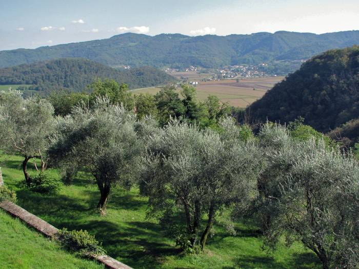 olive orchards umbria cycling tours