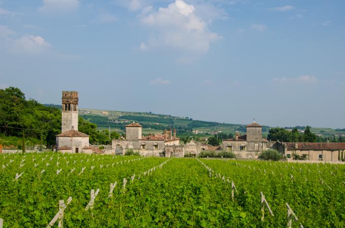 amarone wine bike tour
