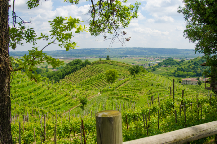prosecco vineyards bike tour