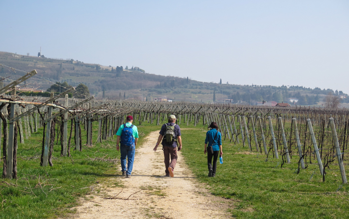 vineyard-stroll-amarone-wine-walk