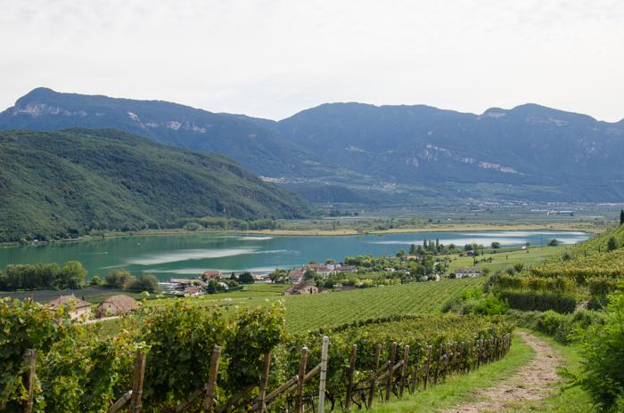 alto-adige-vineyard-wine-tours-italy