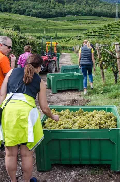 vineyard-visit-wine-tours-italy