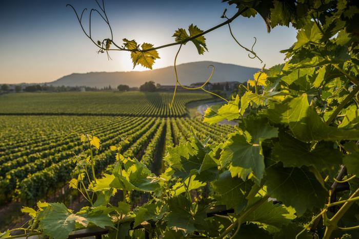franciacorta wine region lombardia