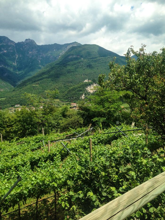 lombardia wine regions italy