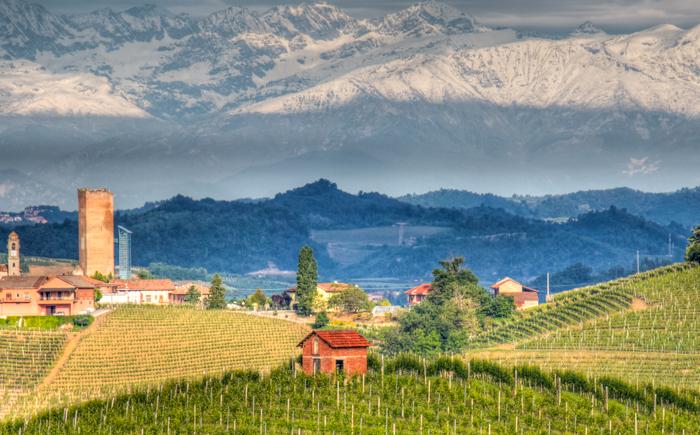 vineyard-landscape-piedmonte-walking-tours-italy