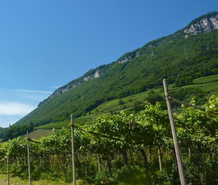 teroldego vineyards wine tours italy bike walking ski