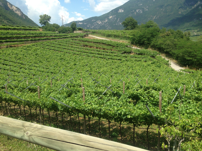 vineyards trentino bike path private italy tours