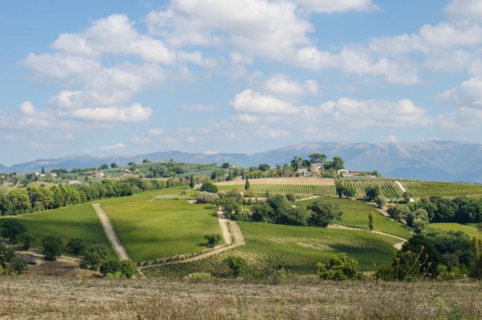 sagrantino vineyards private tours italy walk bike