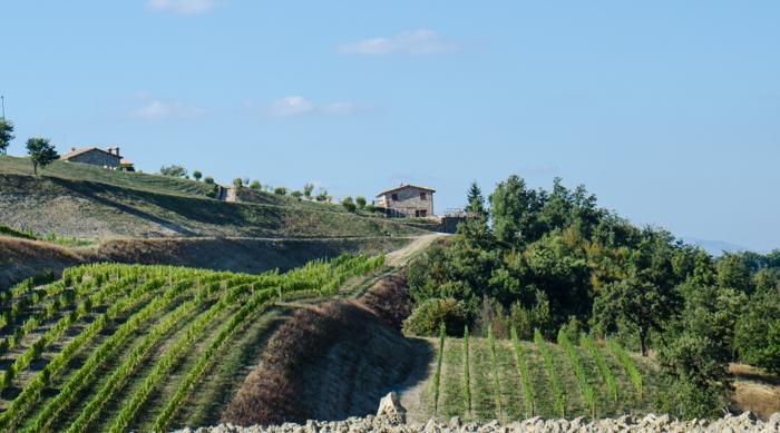 umbria vineyards custom tours cycling walking