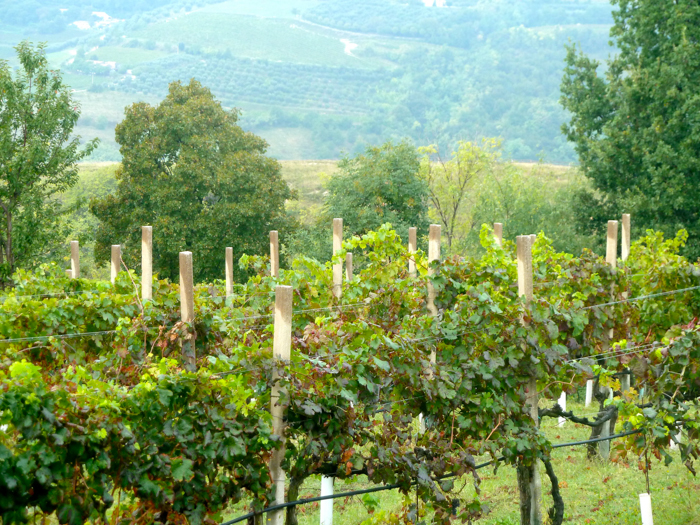 Vineyards wine tours italy walk bike ski