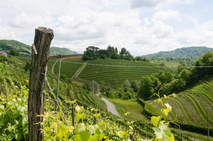 prosecco vineyards wine cycling tours italy