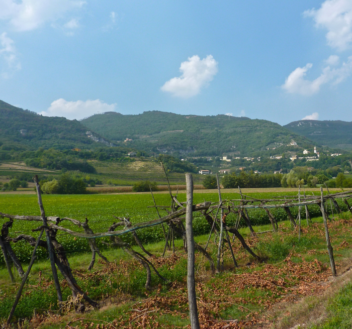 soave vineyards wine bike tours italy