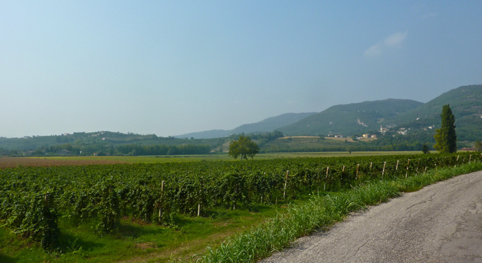 vicenza vineyards private walking tours italy