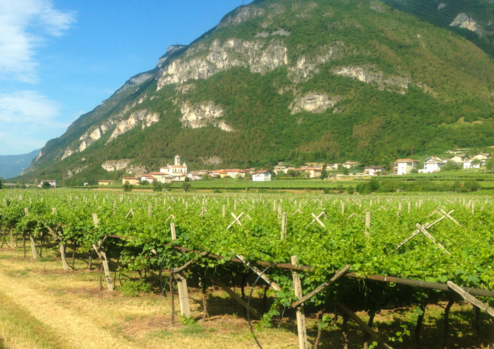 vineyards trentino private walking tours italy