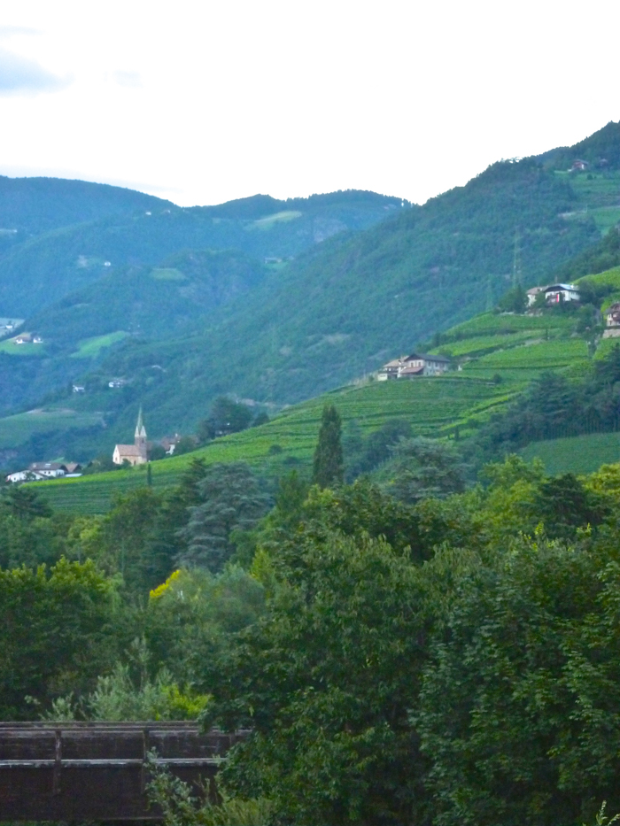 vineyards bolzano wine custom walking tours italy