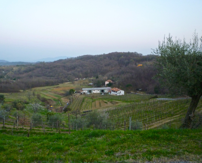 felluga vineyards friuli private tours italy