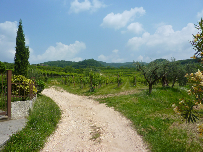 novaia winery private cycling tours italy